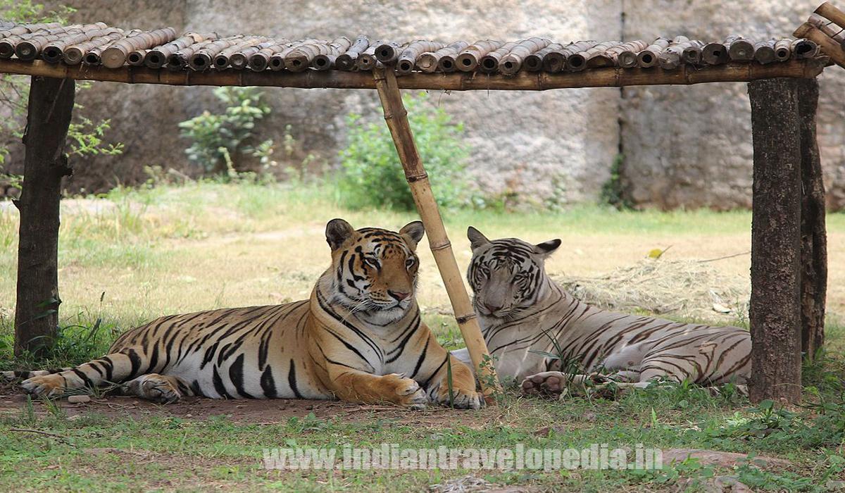 Top Ten tourist places in Punjab_chaatbir zoo