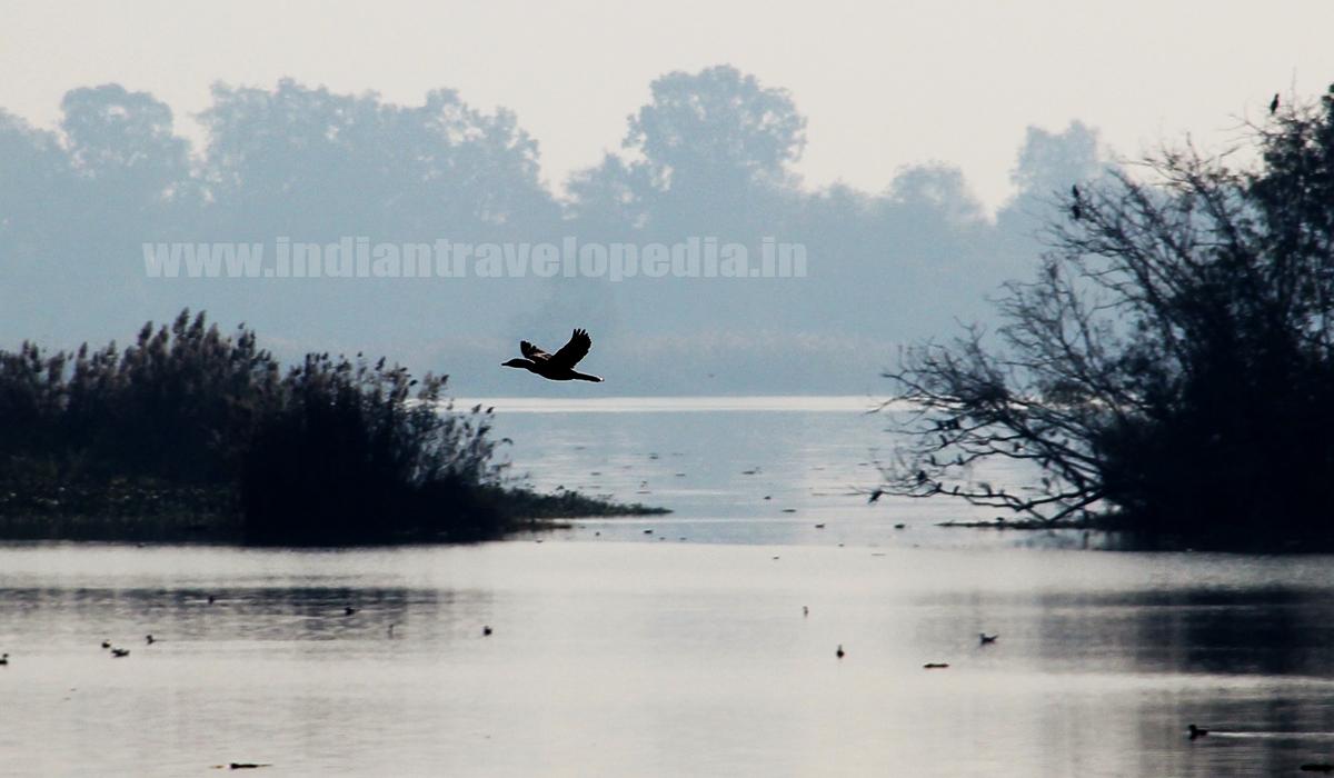 Top Ten tourist places in Punjab_harike wetlands